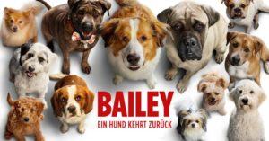 Bailey - Ein Hund kehrt zurück Kinofilm